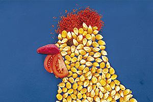 Бележник - Нур пиле